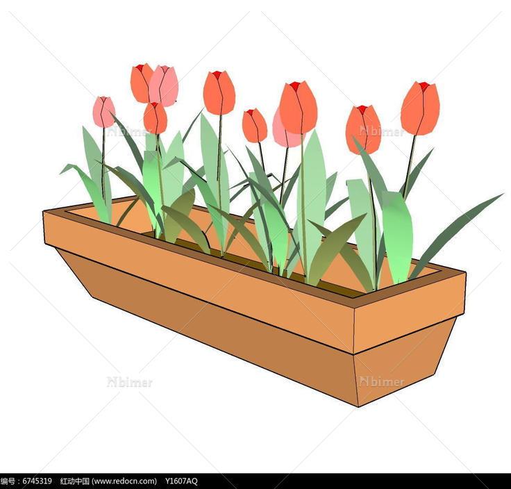 盆栽植物,郁金香,花盆花架,盆花 插花,阳台上的盆花,花盆花篮图片素材