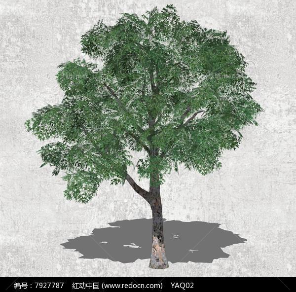 其他  常绿乔木,简单边框素材,墙体素材,简单背景素材,单体房屋ps素材