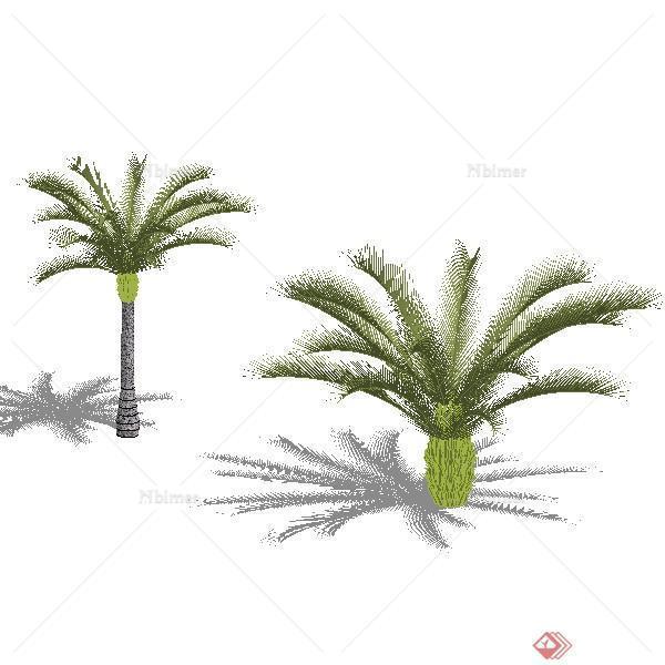 一个苏铁植物su模型素材